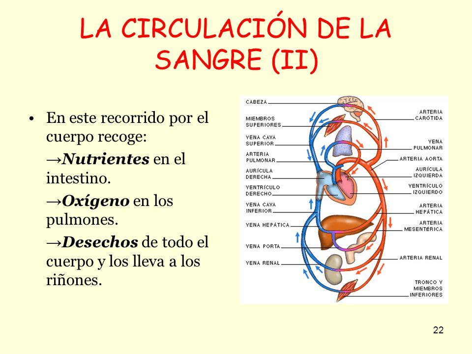 LA CIRCULACIÓN DE LA SANGRE (II)