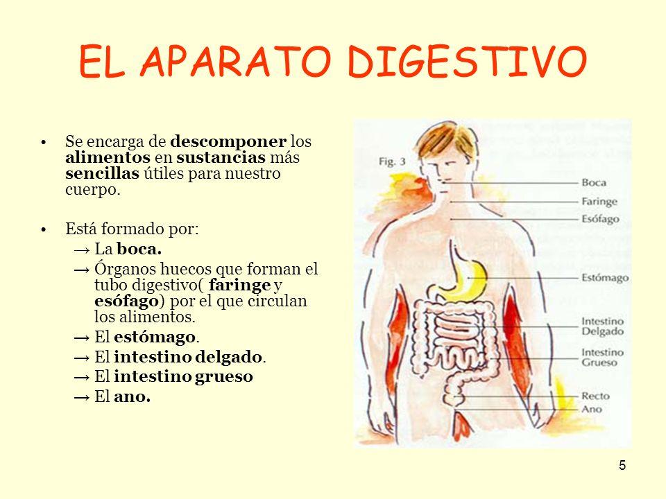EL APARATO DIGESTIVO Se encarga de descomponer los alimentos en sustancias más sencillas útiles para nuestro cuerpo.