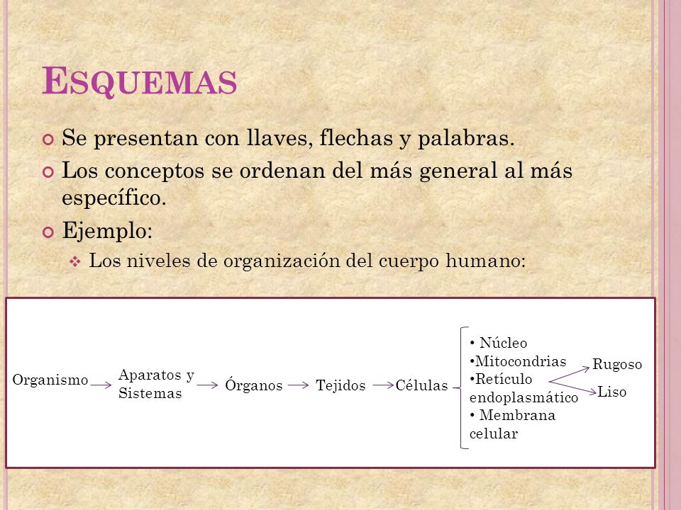 Esquemas Se presentan con llaves, flechas y palabras.