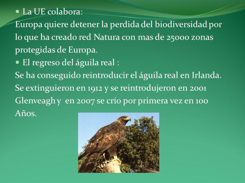 La UE colabora: Europa quiere detener la perdida del biodiversidad por. lo que ha creado red Natura con mas de 25000 zonas.