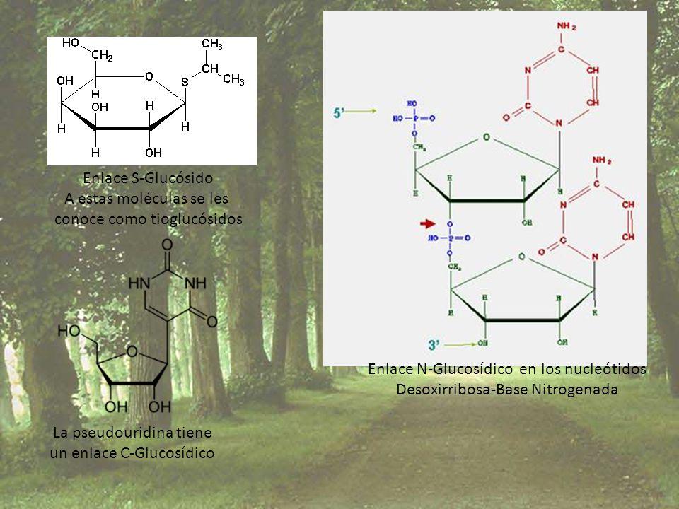 A estas moléculas se les conoce como tioglucósidos