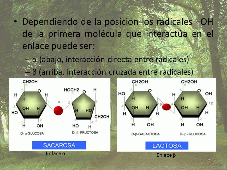 Dependiendo de la posición los radicales –OH de la primera molécula que interactúa en el enlace puede ser: