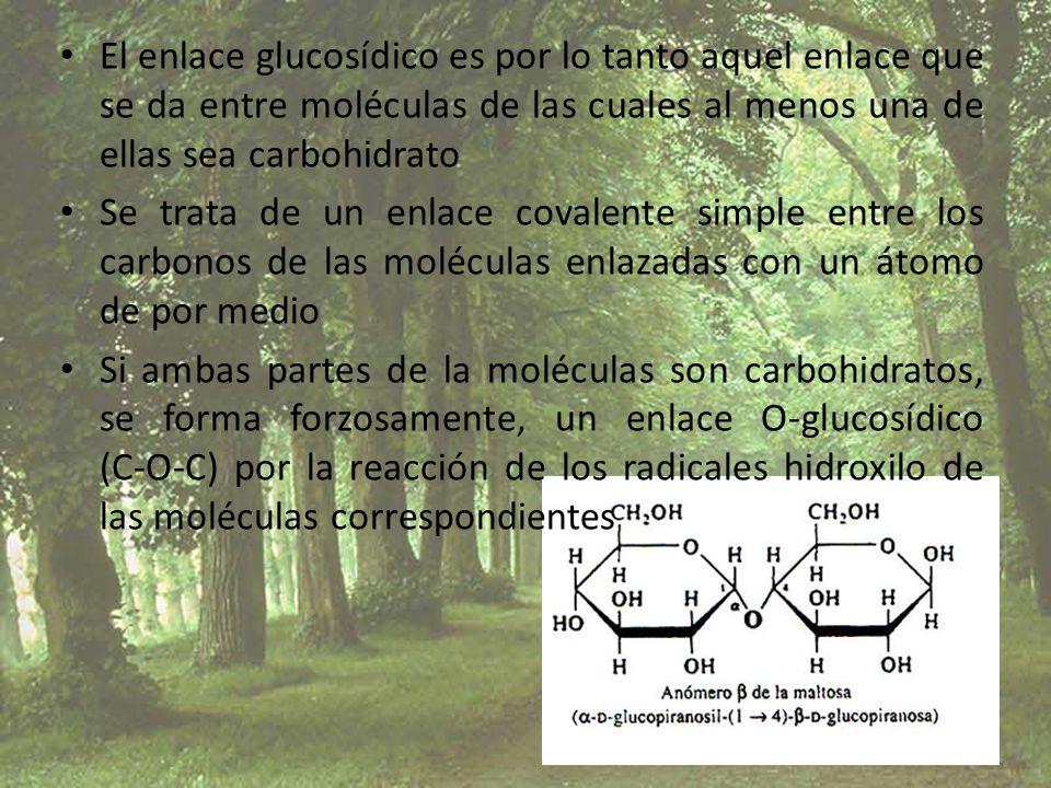 El enlace glucosídico es por lo tanto aquel enlace que se da entre moléculas de las cuales al menos una de ellas sea carbohidrato