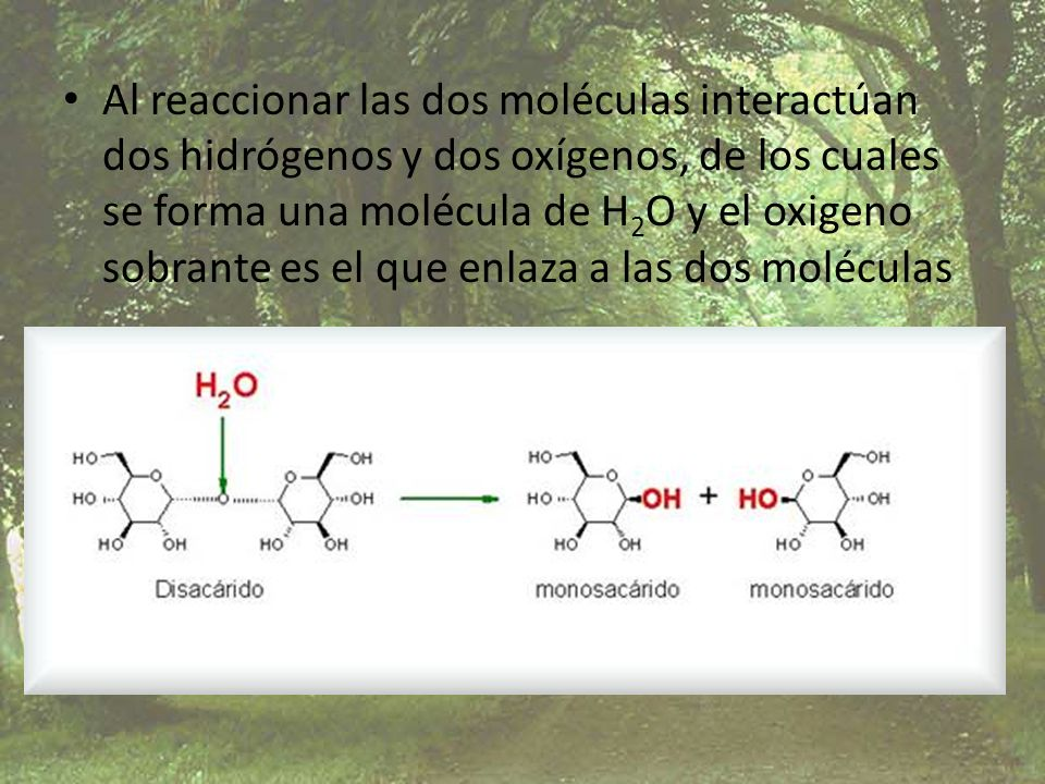 Al reaccionar las dos moléculas interactúan dos hidrógenos y dos oxígenos, de los cuales se forma una molécula de H2O y el oxigeno sobrante es el que enlaza a las dos moléculas