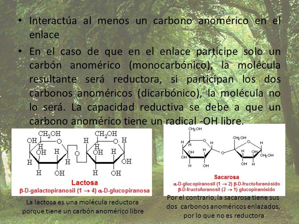 Interactúa al menos un carbono anomérico en el enlace