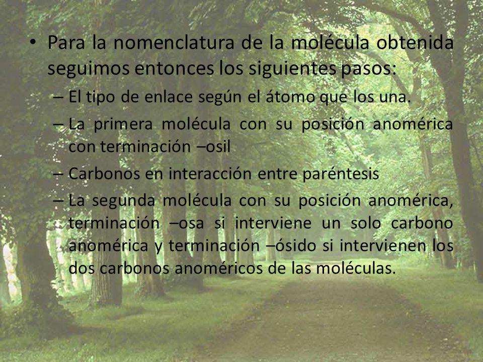 Para la nomenclatura de la molécula obtenida seguimos entonces los siguientes pasos: