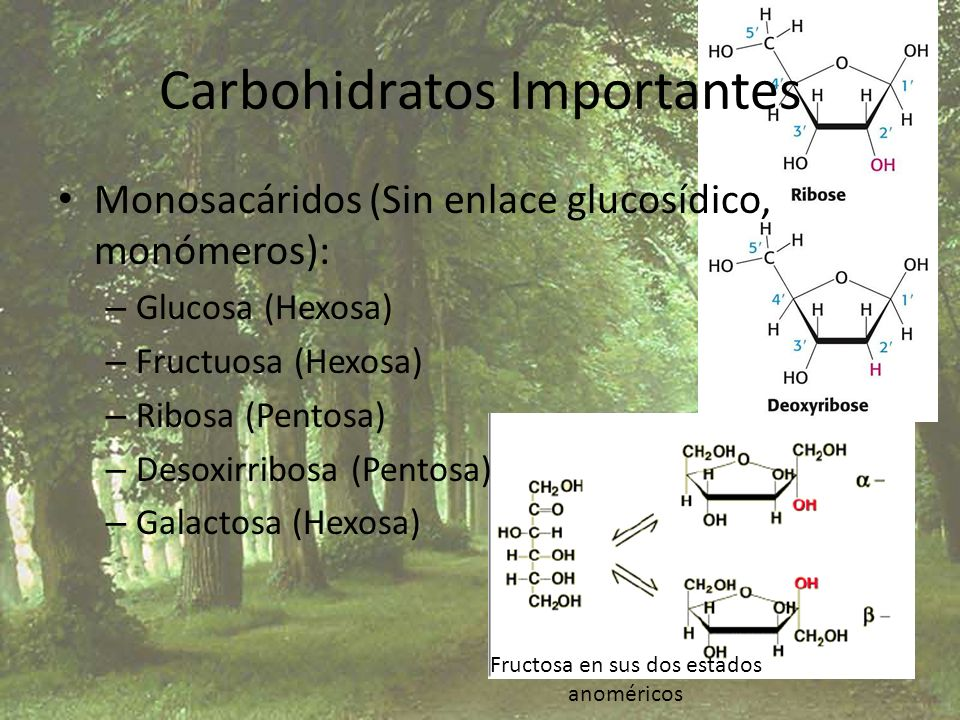 Carbohidratos Importantes