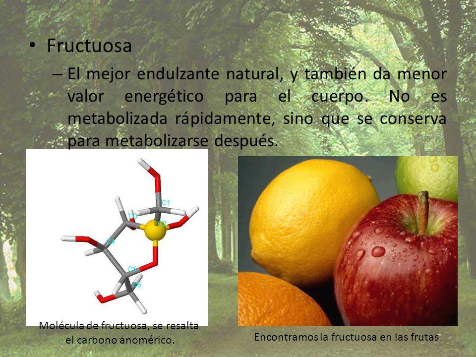 Molécula de fructuosa, se resalta