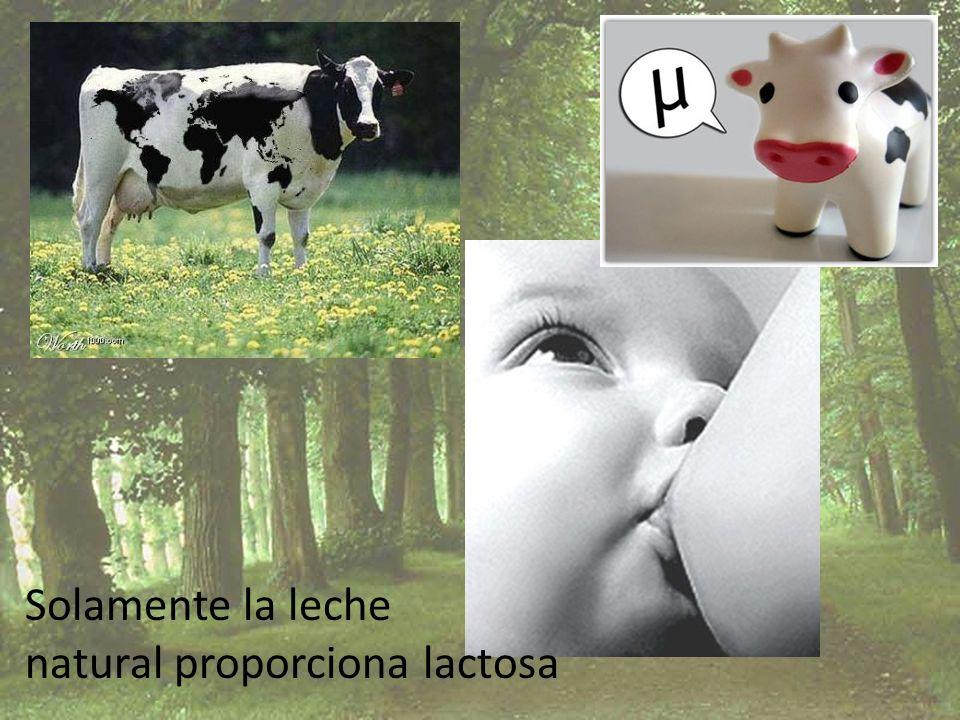 Solamente la leche natural proporciona lactosa