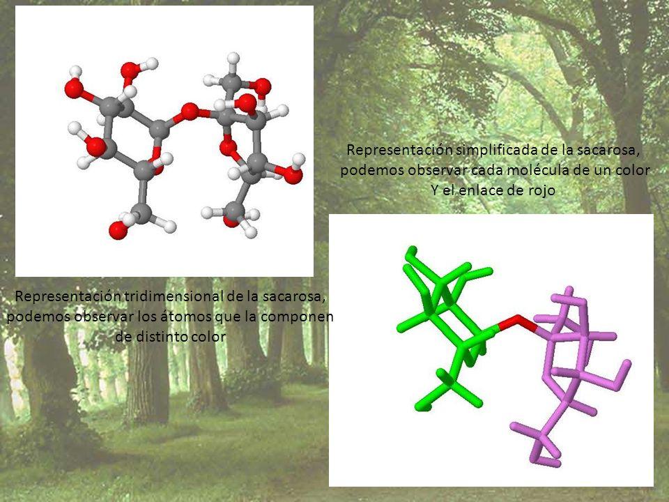 Representación simplificada de la sacarosa,