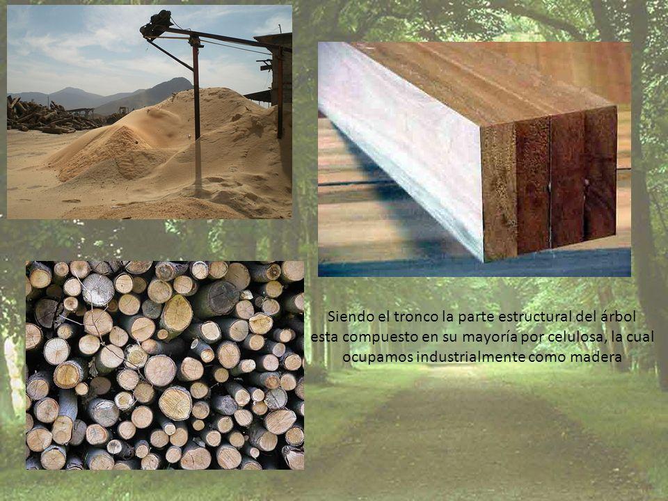 Siendo el tronco la parte estructural del árbol