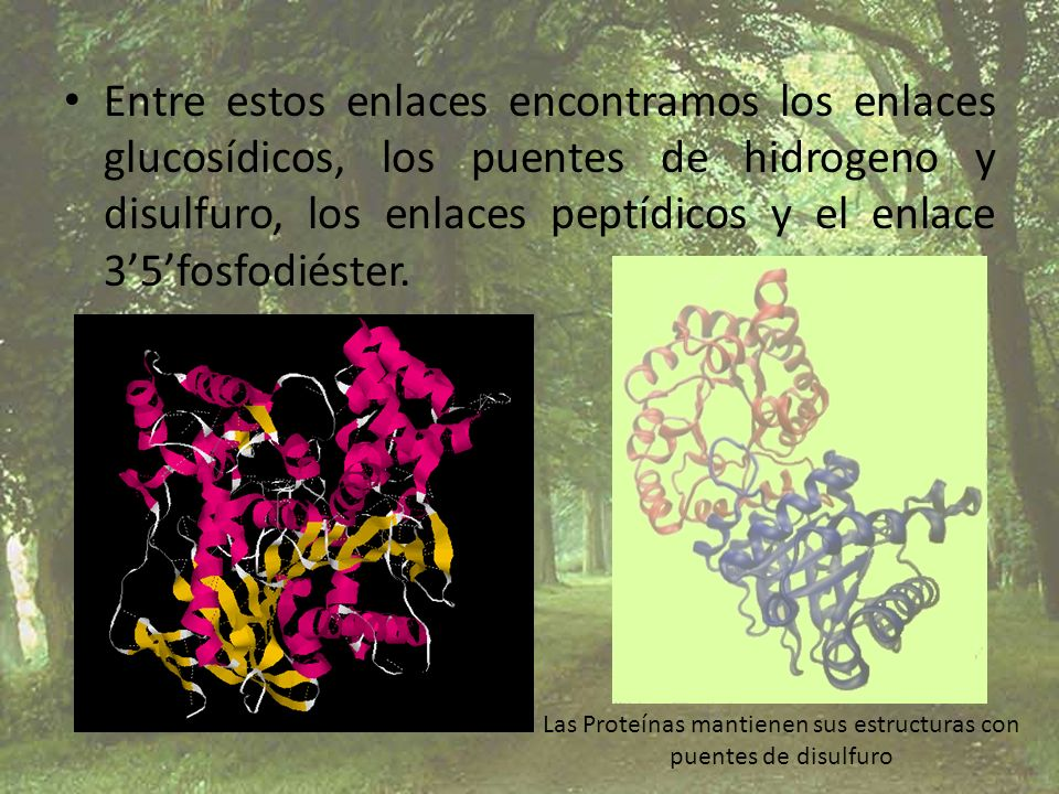 Las Proteínas mantienen sus estructuras con
