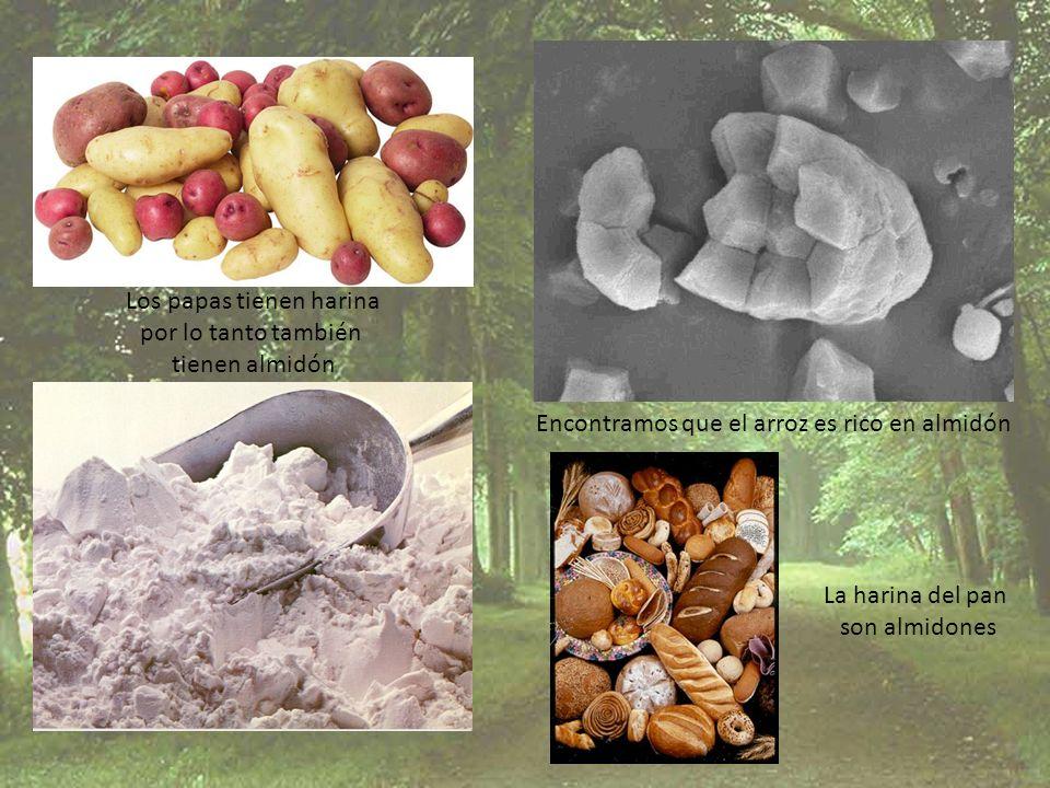 Los papas tienen harina