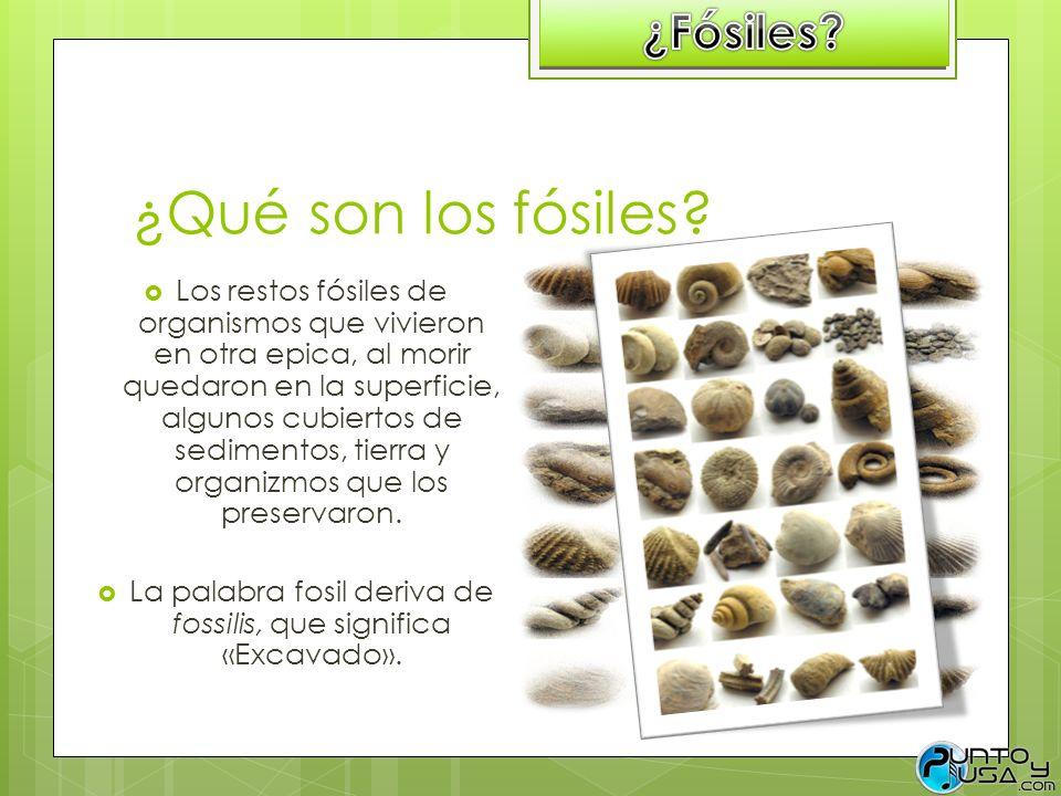 La palabra fosil deriva de fossilis, que significa «Excavado».