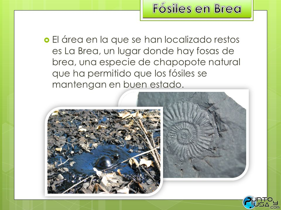Fósiles en Brea