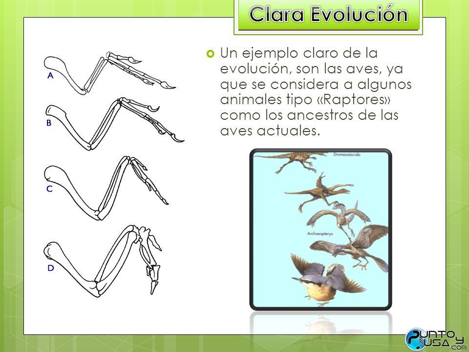 Clara Evolución