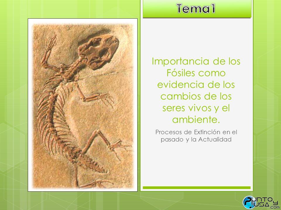 Procesos de Extinción en el pasado y la Actualidad