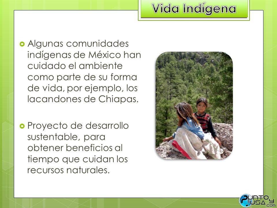 Vida Indígena Algunas comunidades indígenas de México han cuidado el ambiente como parte de su forma de vida, por ejemplo, los lacandones de Chiapas.