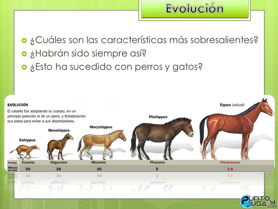 Evolución ¿Cuáles son las características más sobresalientes