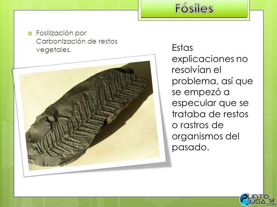Fósiles Fosilización por Carbonización de restos vegetales.