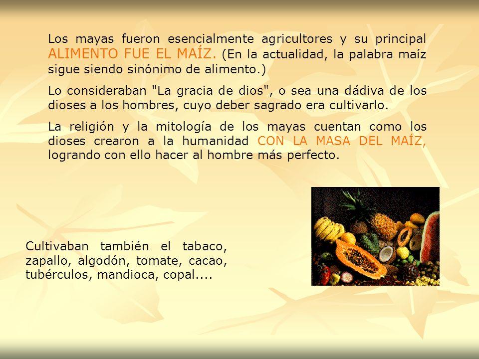 Los mayas fueron esencialmente agricultores y su principal ALIMENTO FUE EL MAÍZ. (En la actualidad, la palabra maíz sigue siendo sinónimo de alimento.)