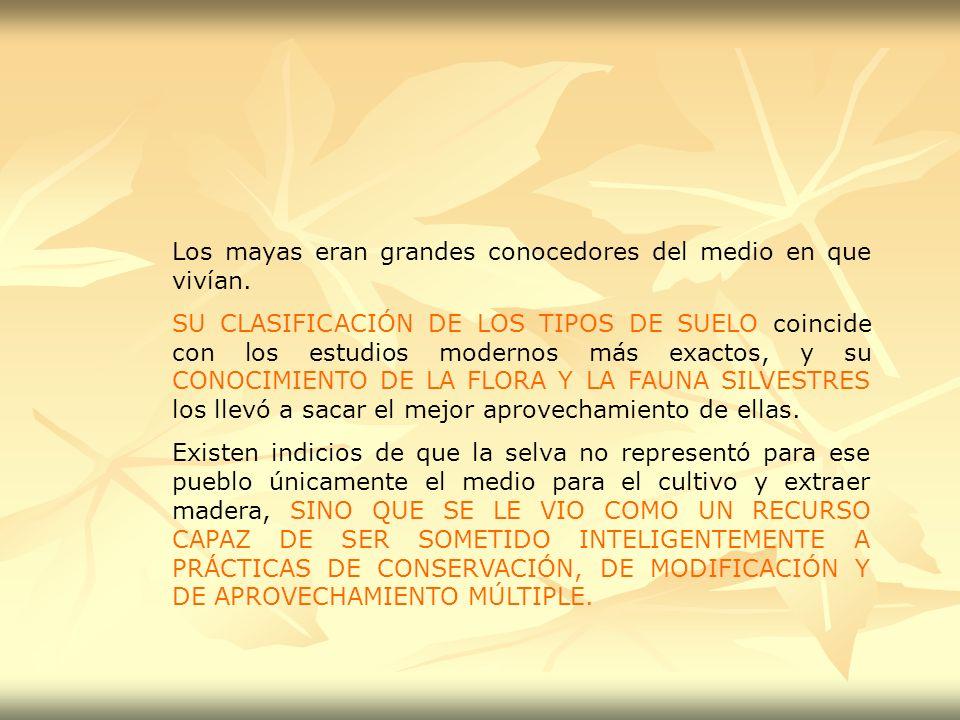 Los mayas eran grandes conocedores del medio en que vivían.