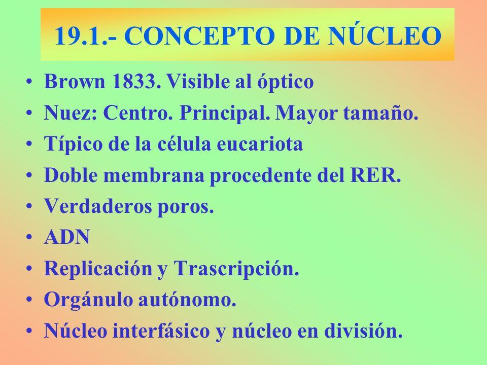 19.1.- CONCEPTO DE NÚCLEO Brown 1833. Visible al óptico