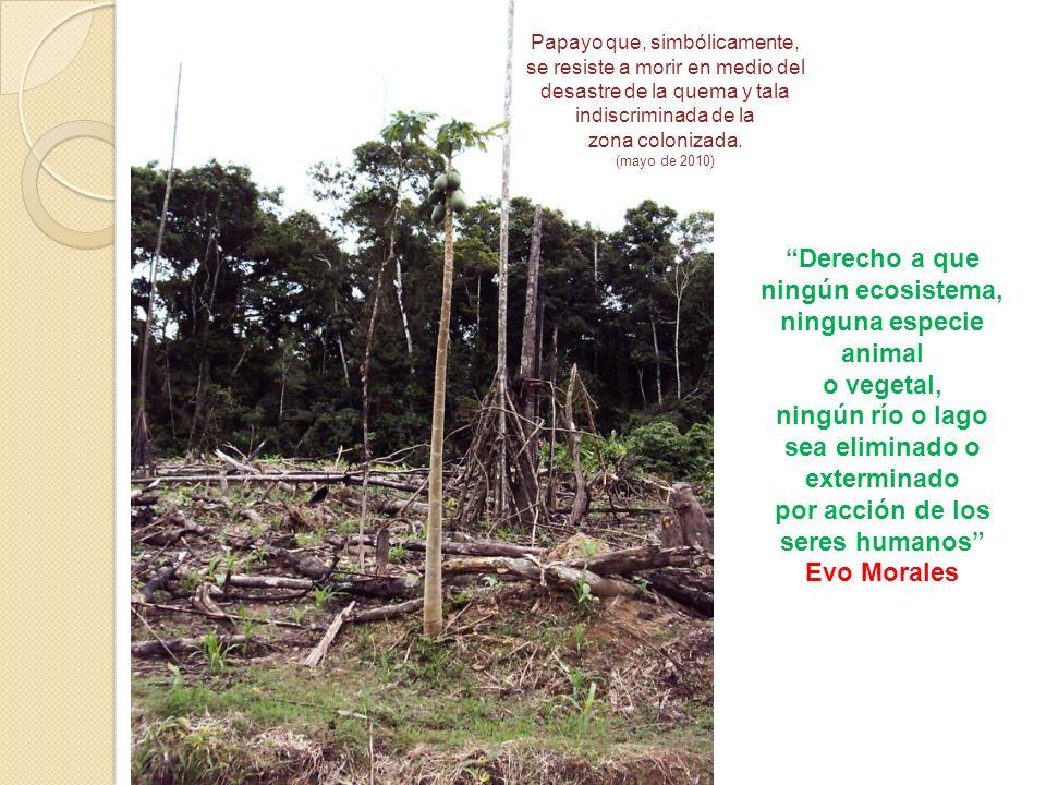 Derecho a que ningún ecosistema, ninguna especie animal
