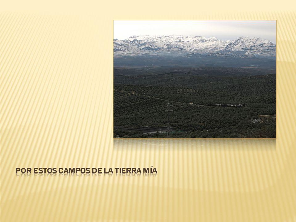 POR ESTOS CAMPOS DE LA TIERRA MÍA