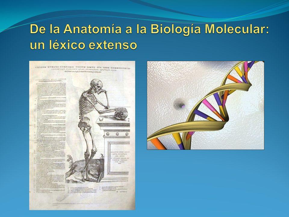 De la Anatomía a la Biología Molecular: un léxico extenso