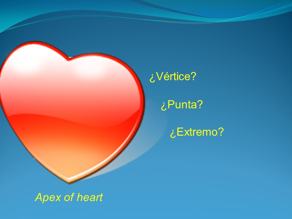 ¿Vértice ¿Punta ¿Extremo Apex of heart