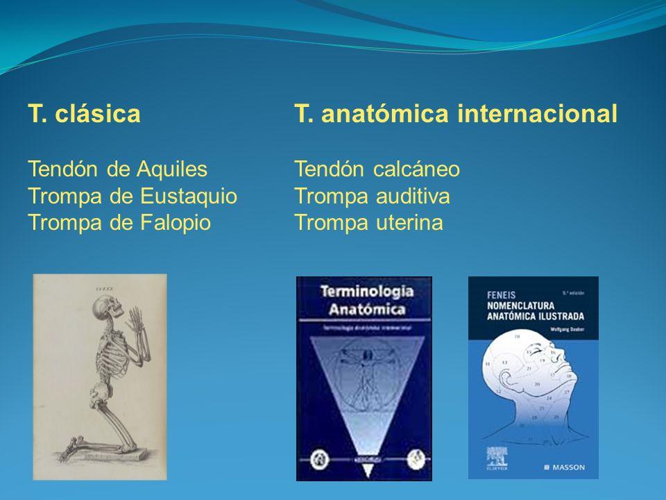T. clásica T. anatómica internacional