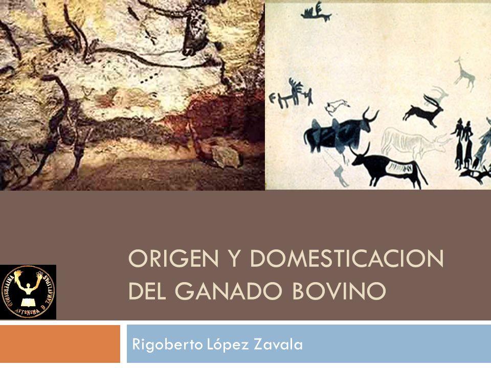 ORIGEN Y DOMESTICACION DEL GANADO BOVINO