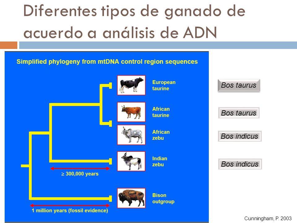 Diferentes tipos de ganado de acuerdo a análisis de ADN