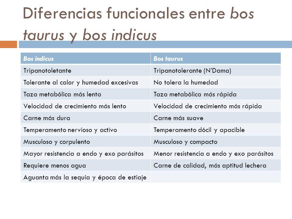 Diferencias funcionales entre bos taurus y bos indicus