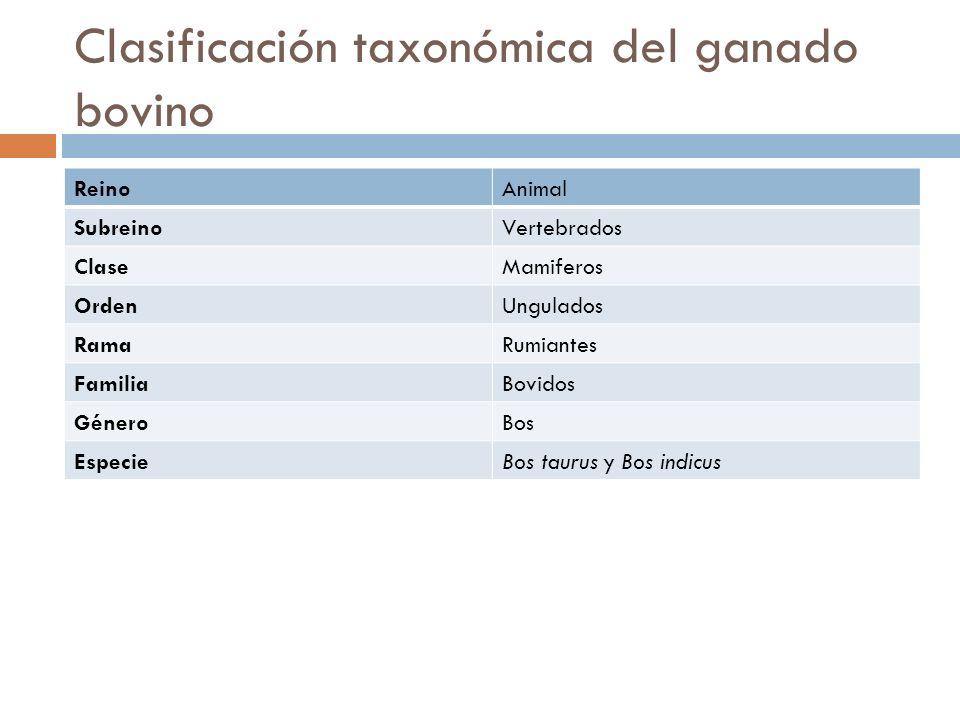 Clasificación taxonómica del ganado bovino