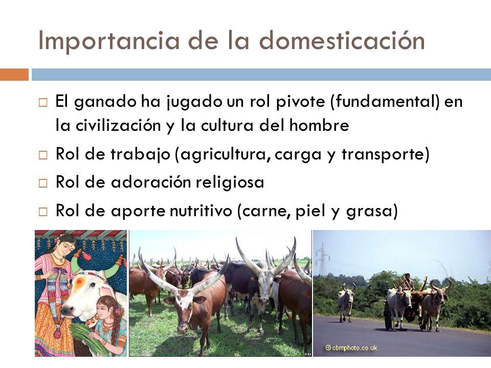 Importancia de la domesticación