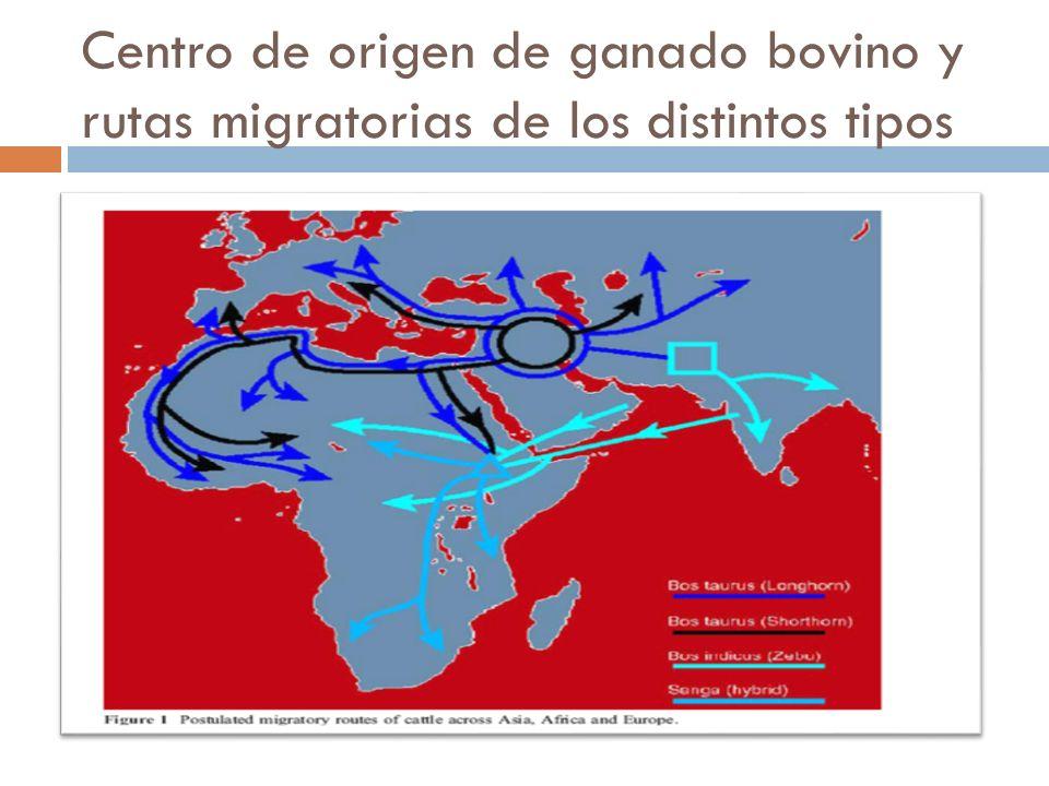 Centro de origen de ganado bovino y rutas migratorias de los distintos tipos
