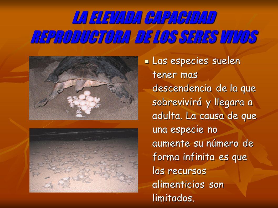 LA ELEVADA CAPACIDAD REPRODUCTORA DE LOS SERES VIVOS