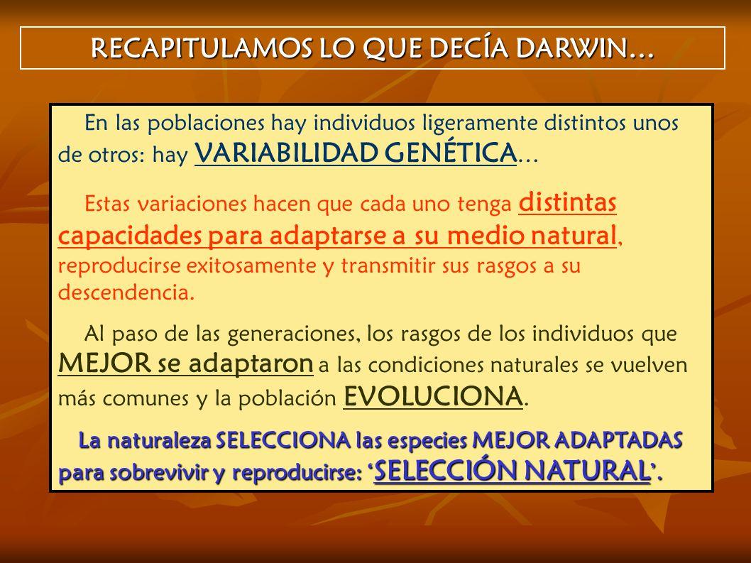RECAPITULAMOS LO QUE DECÍA DARWIN…