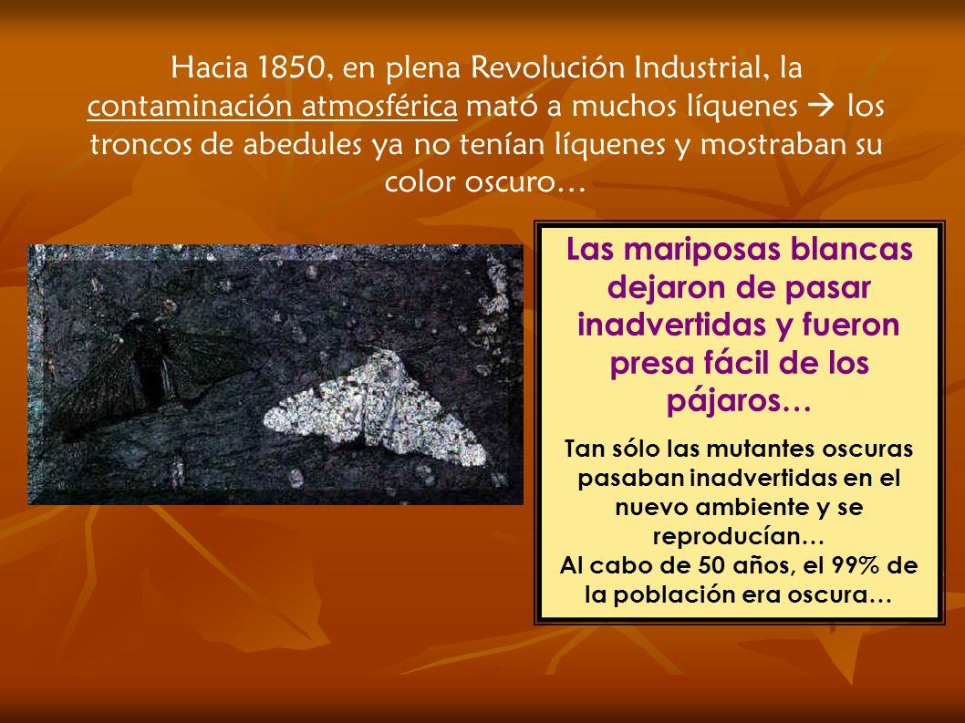 Hacia 1850, en plena Revolución Industrial, la contaminación atmosférica mató a muchos líquenes  los troncos de abedules ya no tenían líquenes y mostraban su color oscuro…