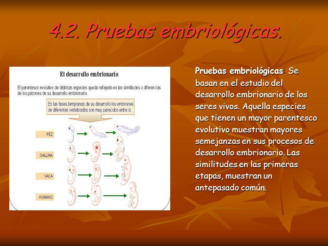 4.2. Pruebas embriológicas.