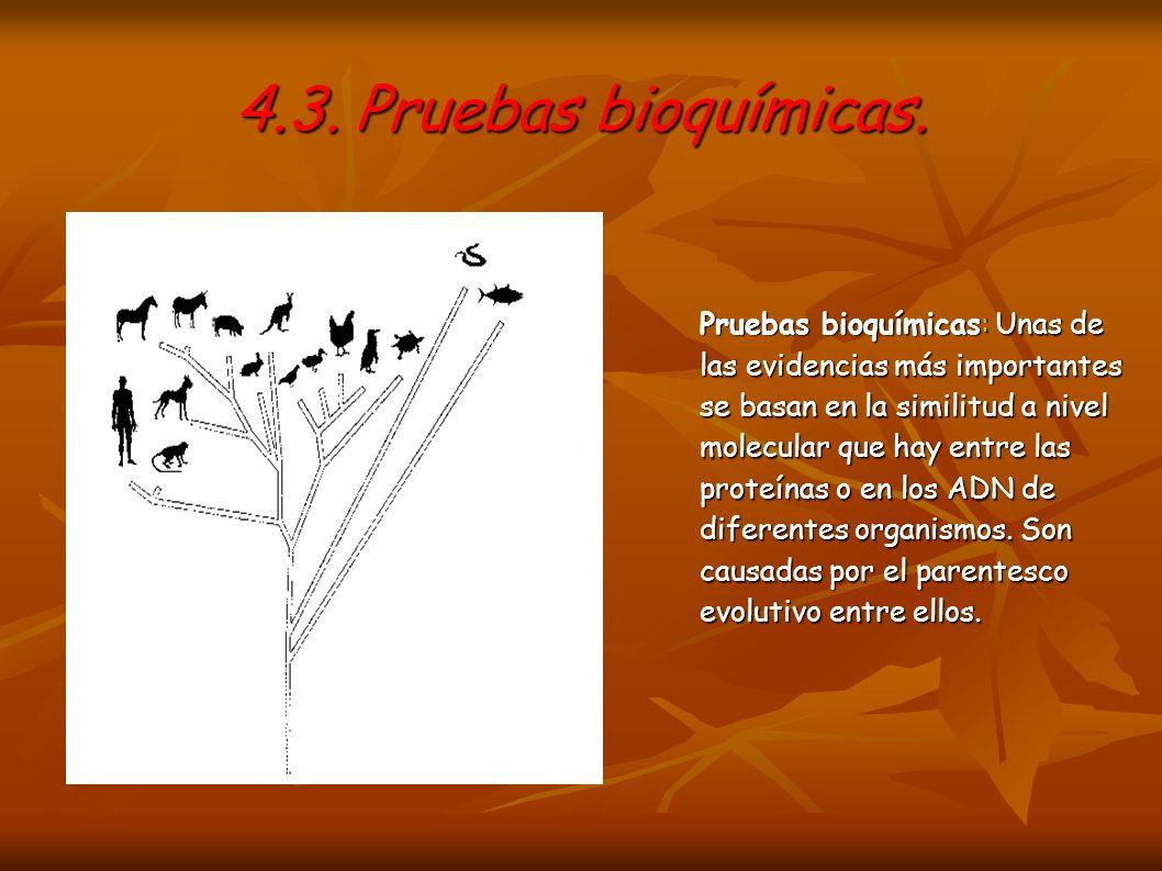 4.3. Pruebas bioquímicas.