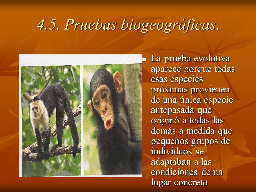 4.5. Pruebas biogeográficas.