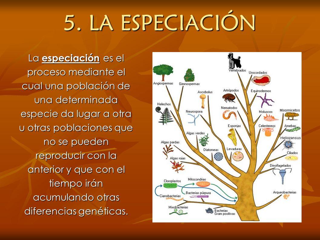 5. LA ESPECIACIÓN
