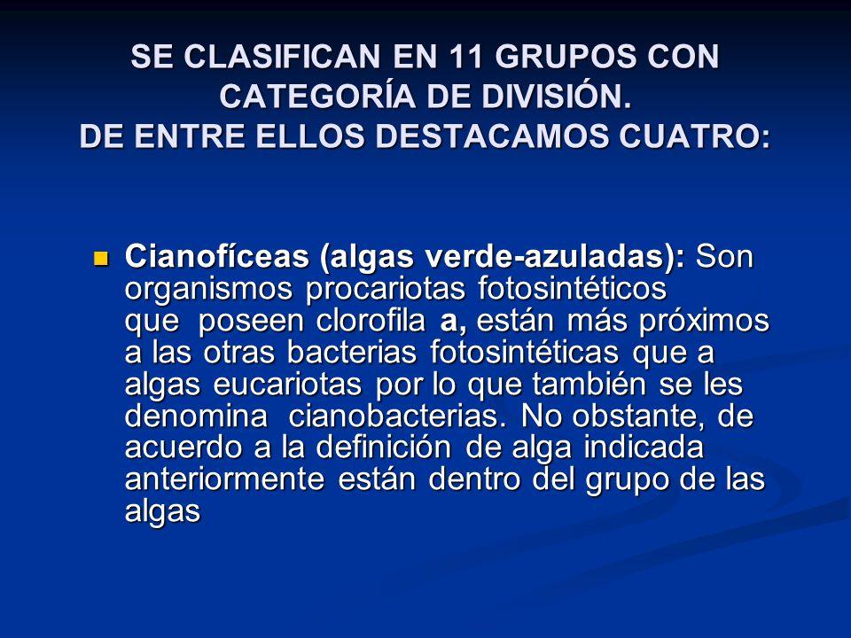 SE CLASIFICAN EN 11 GRUPOS CON CATEGORÍA DE DIVISIÓN