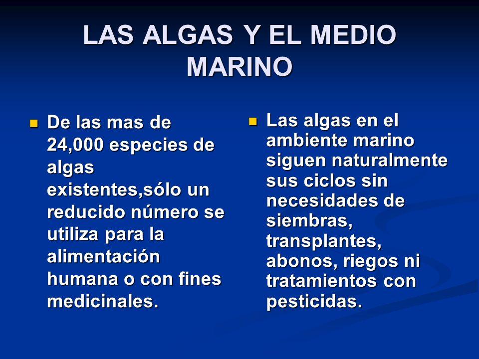 LAS ALGAS Y EL MEDIO MARINO