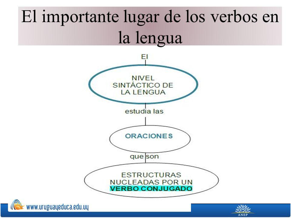 El importante lugar de los verbos en la lengua