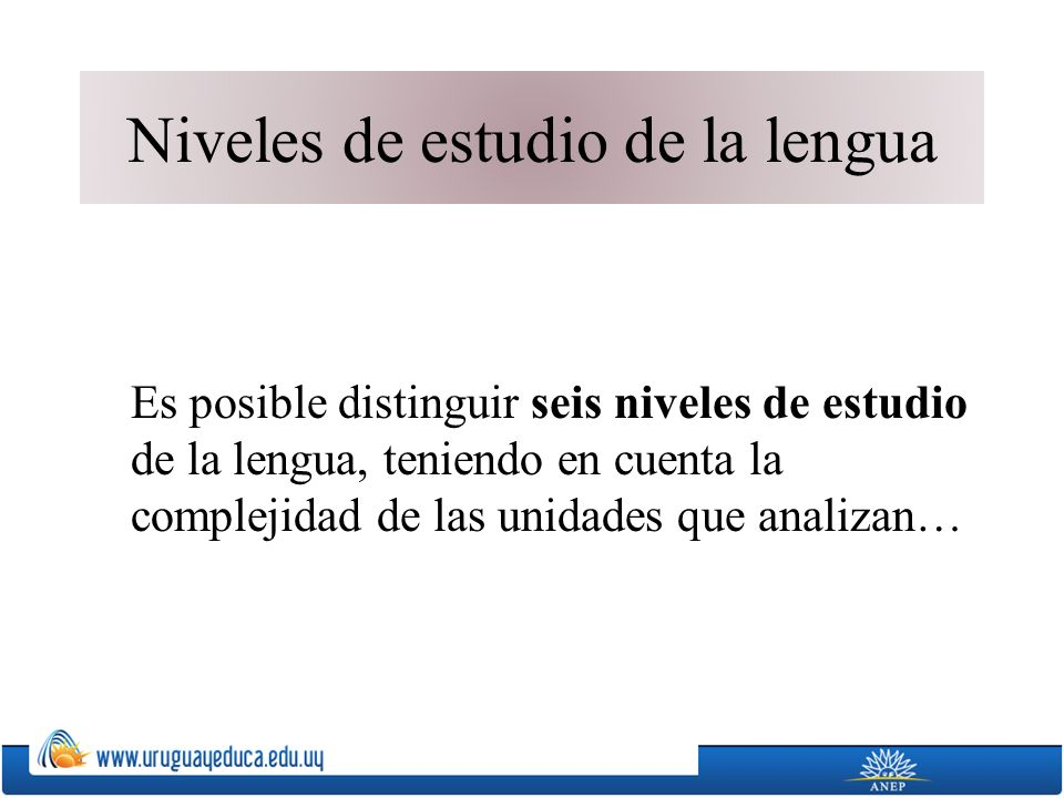 Niveles de estudio de la lengua