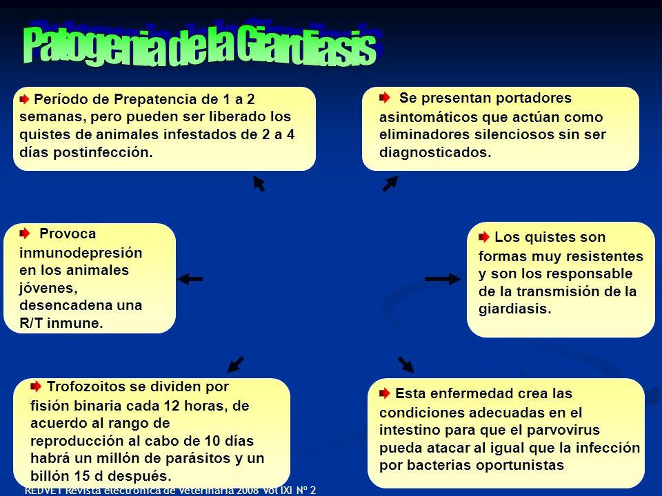 Patogenia de la Giardiasis